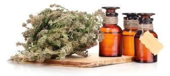 Как лечить простудные заболевания с помощью лекарственных растений?