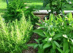 Травы в саду – профилактика рака