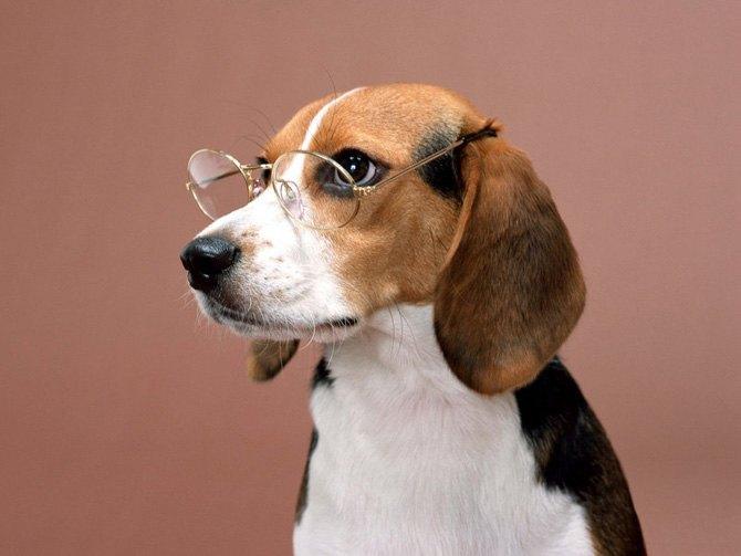 Кинологи научили собаку находить по запаху рак
