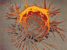 У раковых и иммунных клеток оказалось много общего