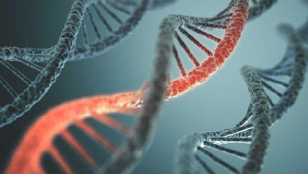 К лейкемии приводят генетические ошибки