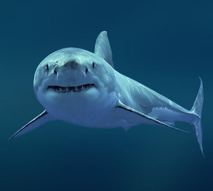 Кровь акулы спасает от рака