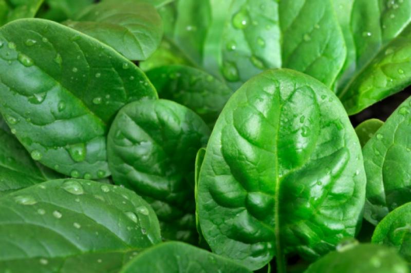 Употребление шпината помогает предупредить рак
