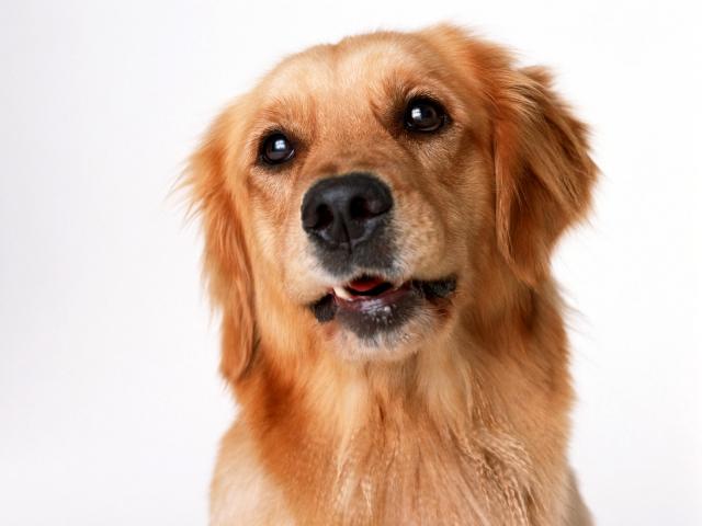 В Британии собаки помогут врачам диагностировать рак