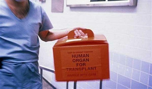 Трансплантация органов повышает риск развития меланомы