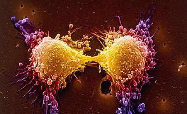 Профилактика рака в организме человека