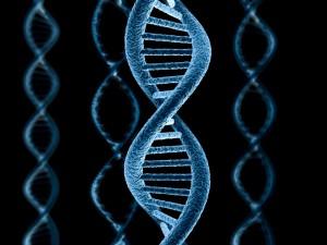 В человеческих генах найдена причина рака крови