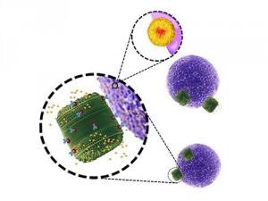 Генетически-модифицированные водоросли справятся с раком
