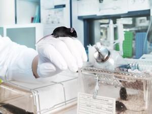 Новый способ доставки лекарства позволяет уничтожать только раковые клетки
