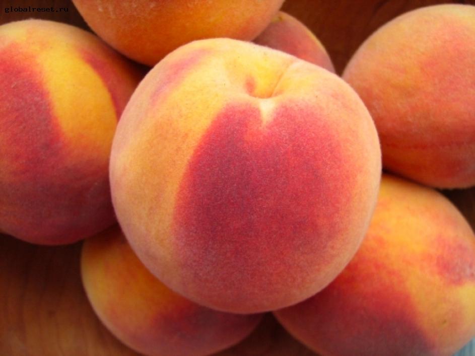 Персики помогут предотвратить и вылечить рак груди