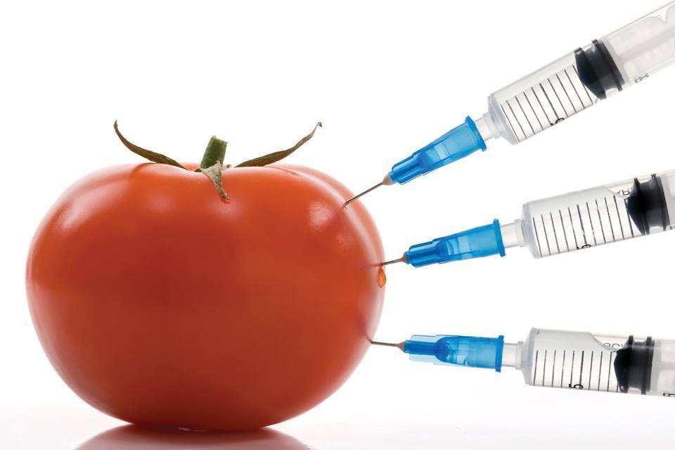 Новые данные свидетельствуют, что ГМО может вызывать рак