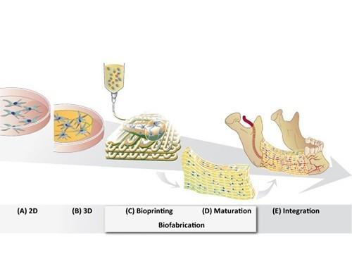 Эффективность противоопухолевых препаратов проверят на гидрогелевых тканях