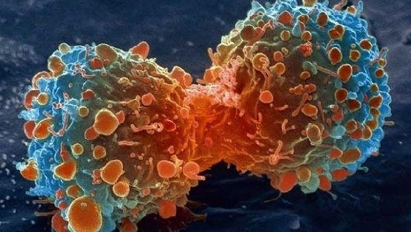 Рак не возникает спонтанно