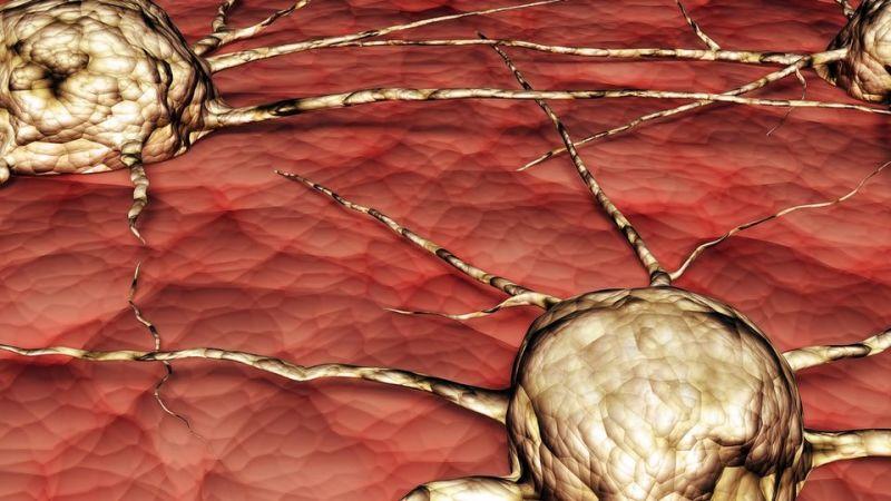 Медики воссоздали синтетическую форму протеина рака
