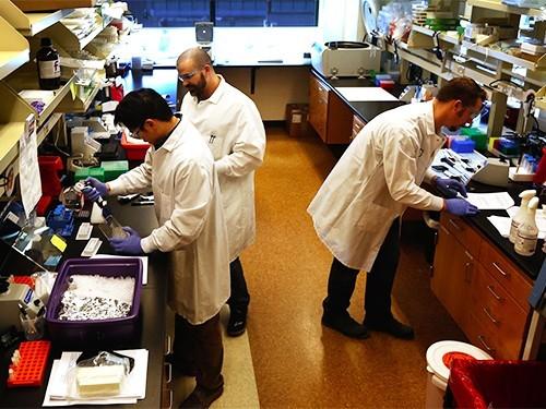 Клинические испытания противораковой терапии остановлены из-за смерти пациентов