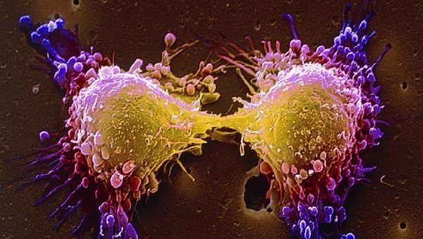 Клетки кожи обеспечат исцеление от глиобластомы