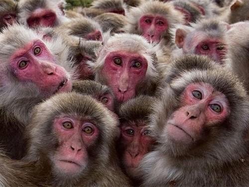 Стволовые клетки помогли обезьянам восстановиться после химиотерапии