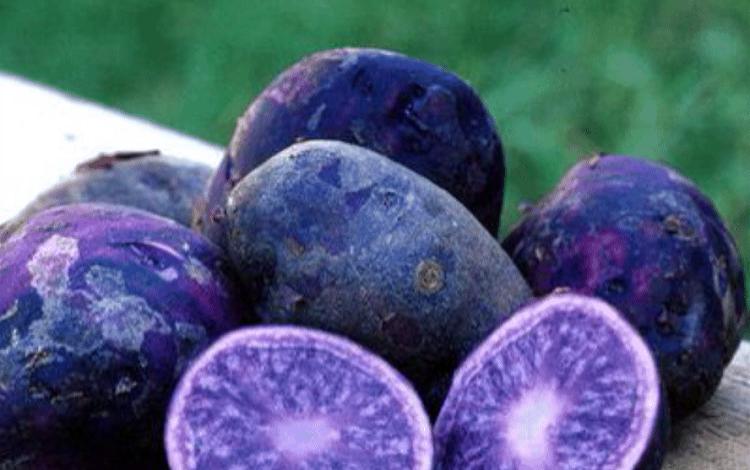 Фиолетовые овощи и фрукты помогают при раке кишечника