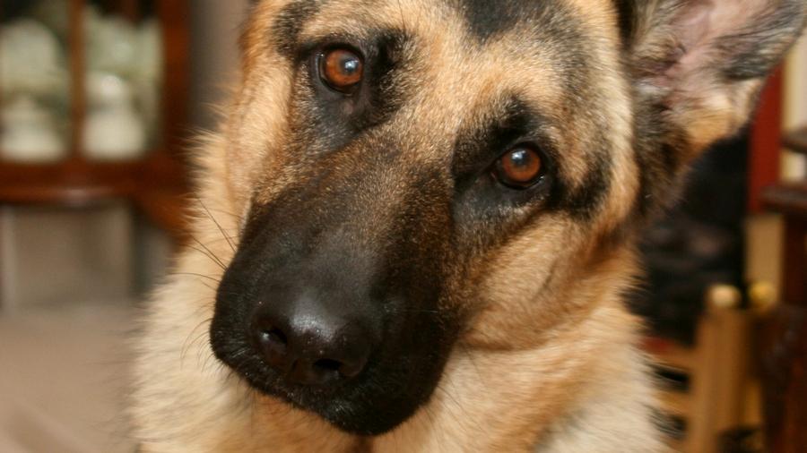 Собаки научились определять наличие онкологических заболеваний у людей
