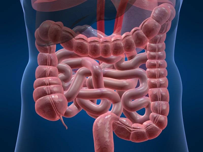 Кишечные микробы могут провоцировать развитие колоректального рака