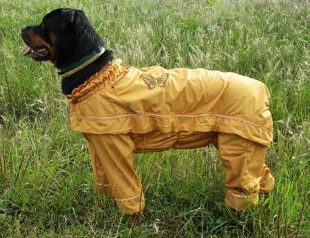 Как обезоружить клеща, спрятавшегося в шерсти у собаки