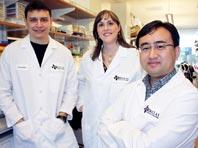 Открытие: росту опухолей способствуют два фермента