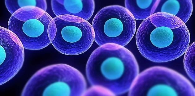 Ученые выявили новые свойства клеток, способные противостоять раку