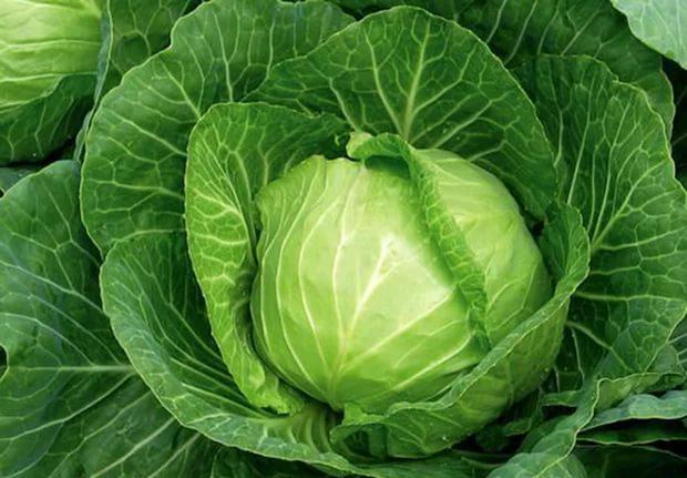 Этот распространенный овощ снижает частоту рецидивов и риск смерти от рака
