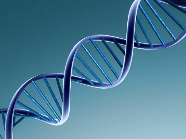 Показана возможность использования последовательностей ДНК для запуска иммунного ответа на рост раковых клеток