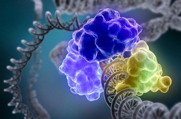 Причина рака груди: снижение репаративных возможностей ДНК