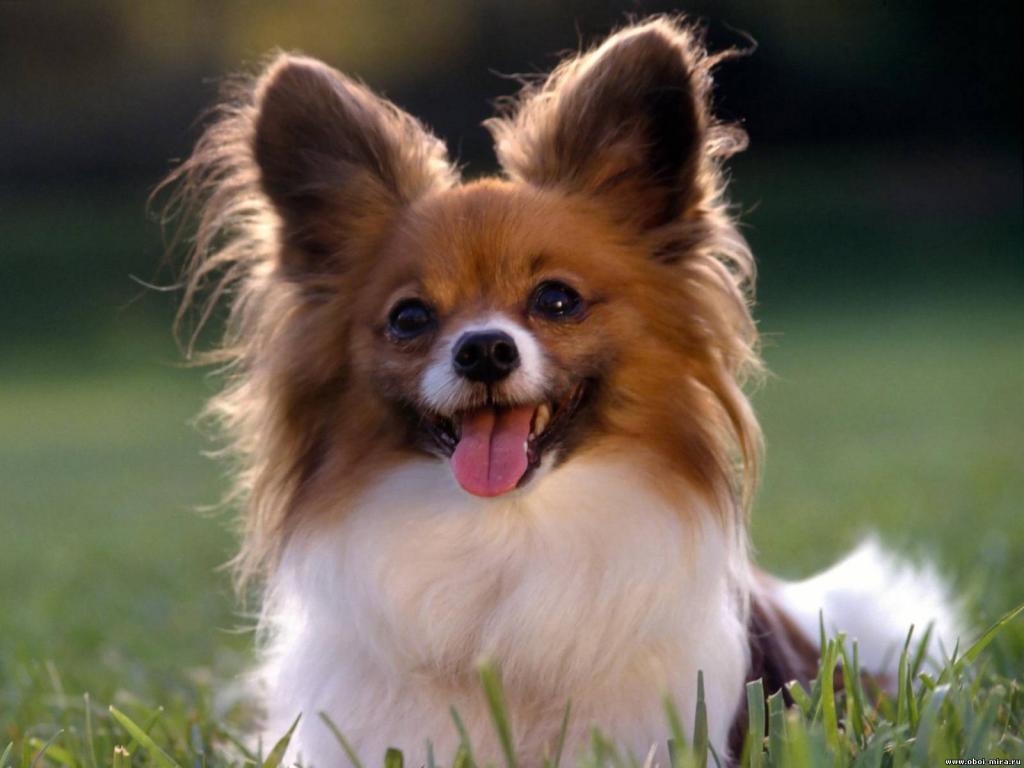 Ученые научили собак распознавать рак по запаху