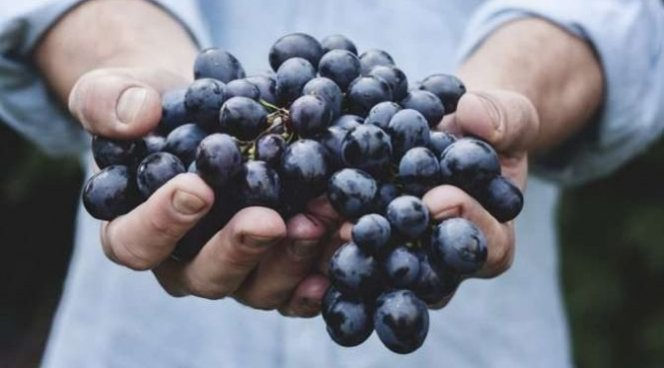 Виноградные косточки помогают от рака