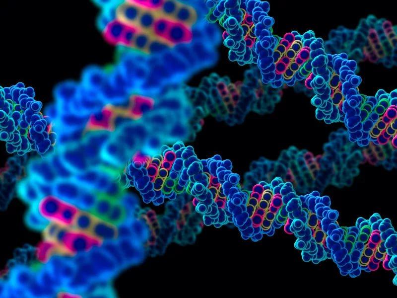 Ученые идентифицировали ген, который способен ограничить рост опухоли молочной железы