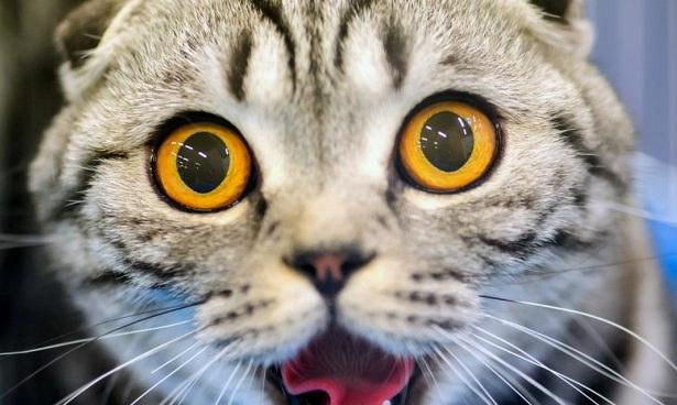 Ученые выяснили, как кошачий паразит приводит к раку мозга