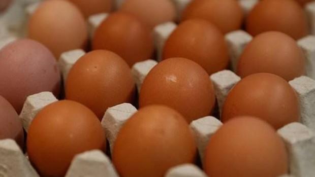 Японские ученые будут выращивать генетически модифицированных кур для борьбы с раком