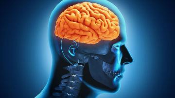 Трансплантация головного мозга.