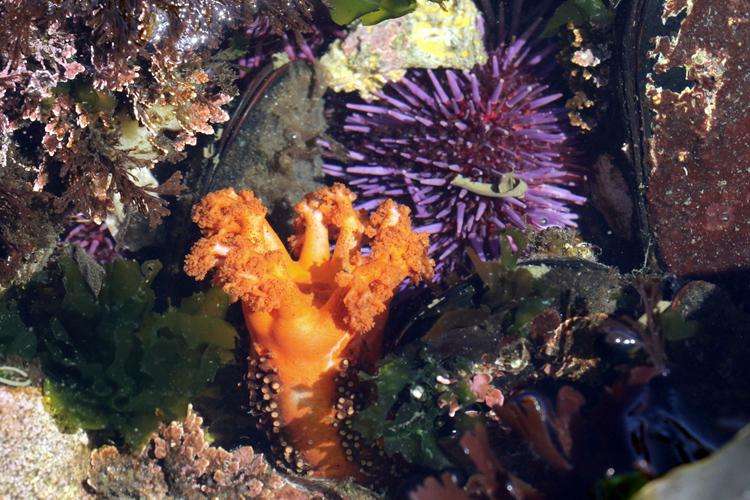 Морской огурец поможет победить рак