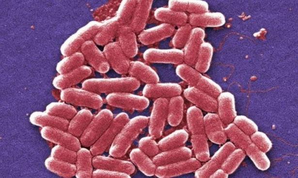 Хорошие бактерии кишечника помогут в борьбе с раком