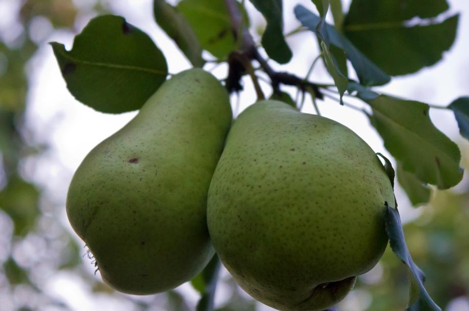 Ученым стало известно какая еда может предотвратить рак