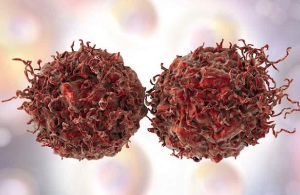Найден ответ на вопрос почему иммунная система не препятствует раку