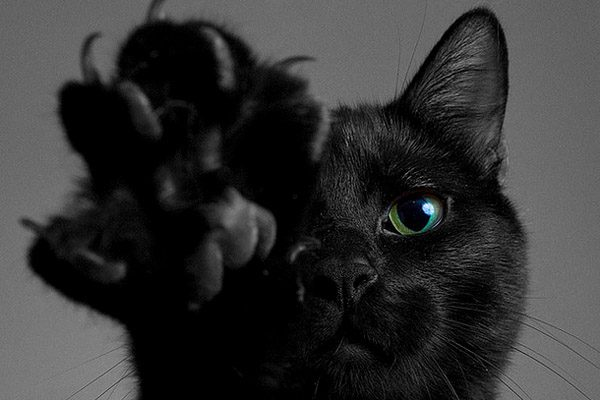 Врачи рассказали, почему заводить кошек опасно