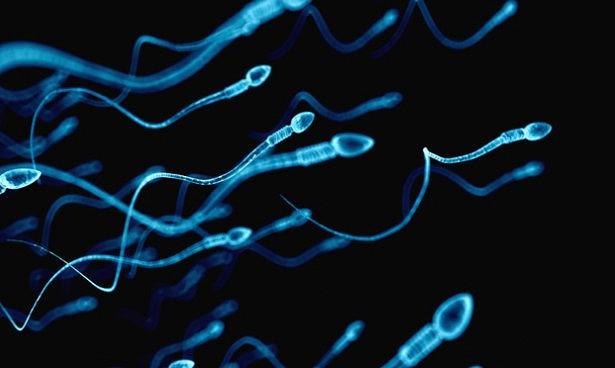 Сперма поможет в лечении рака