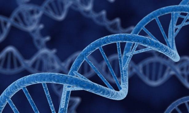 Исследована предрасположенность к раку мочевого пузыря