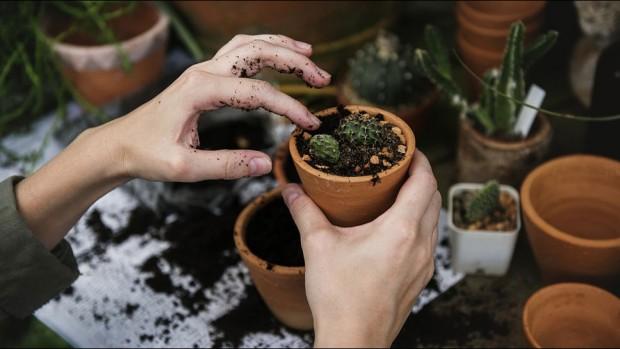 Садоводство может улучшить здоровье людей, выживших после рака