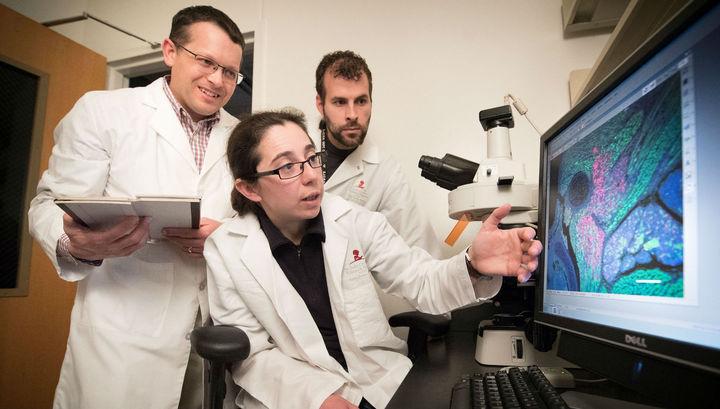 Ученые перехитрили рак