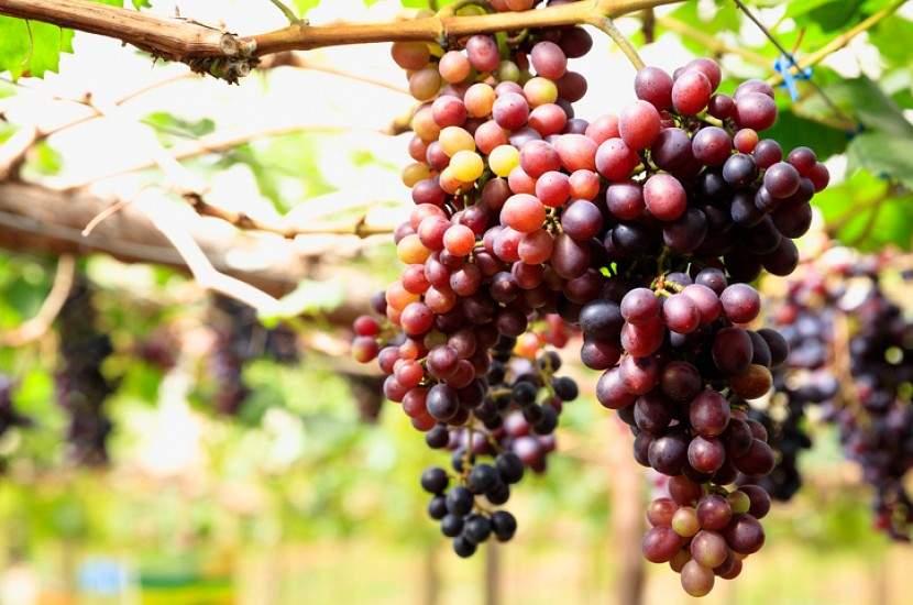 Шесть лучших растительных продуктов, предотвращающих развитие рака