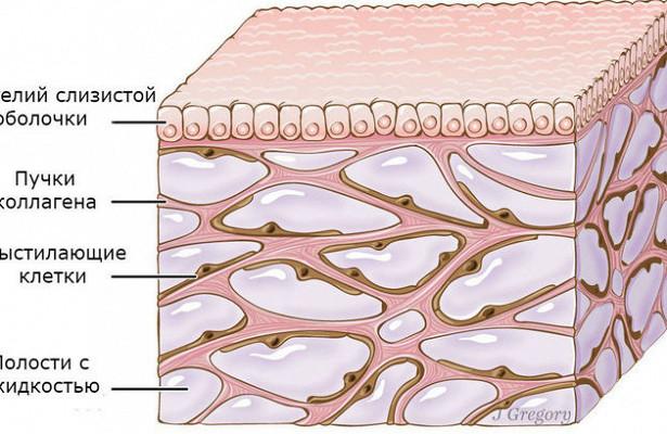 В ходе лечения рака у человека обнаружен неизвестный орган