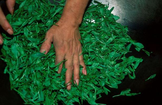Экстракт из чайных листьев оказался эффективен против рака легких