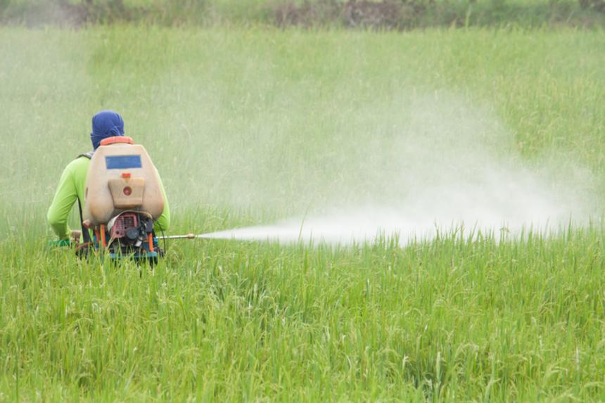 Самый популярный пестицид вызывает рак