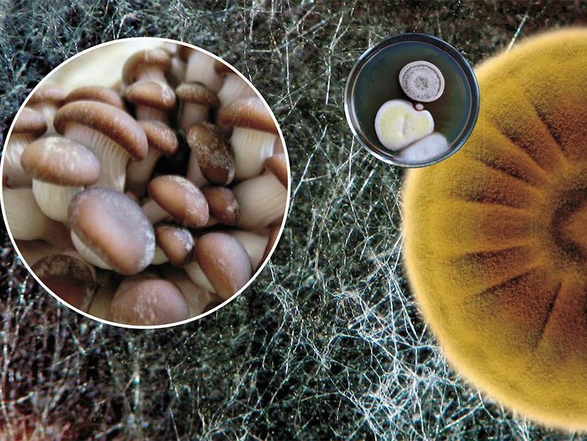 Дикорастущие грибы могут стать основным компонентом лекарств от рака